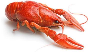 crawfish.org